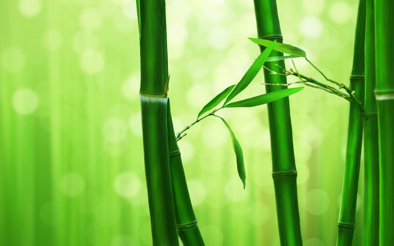 Environmentally focused discounts on our Bamboo paper prints.